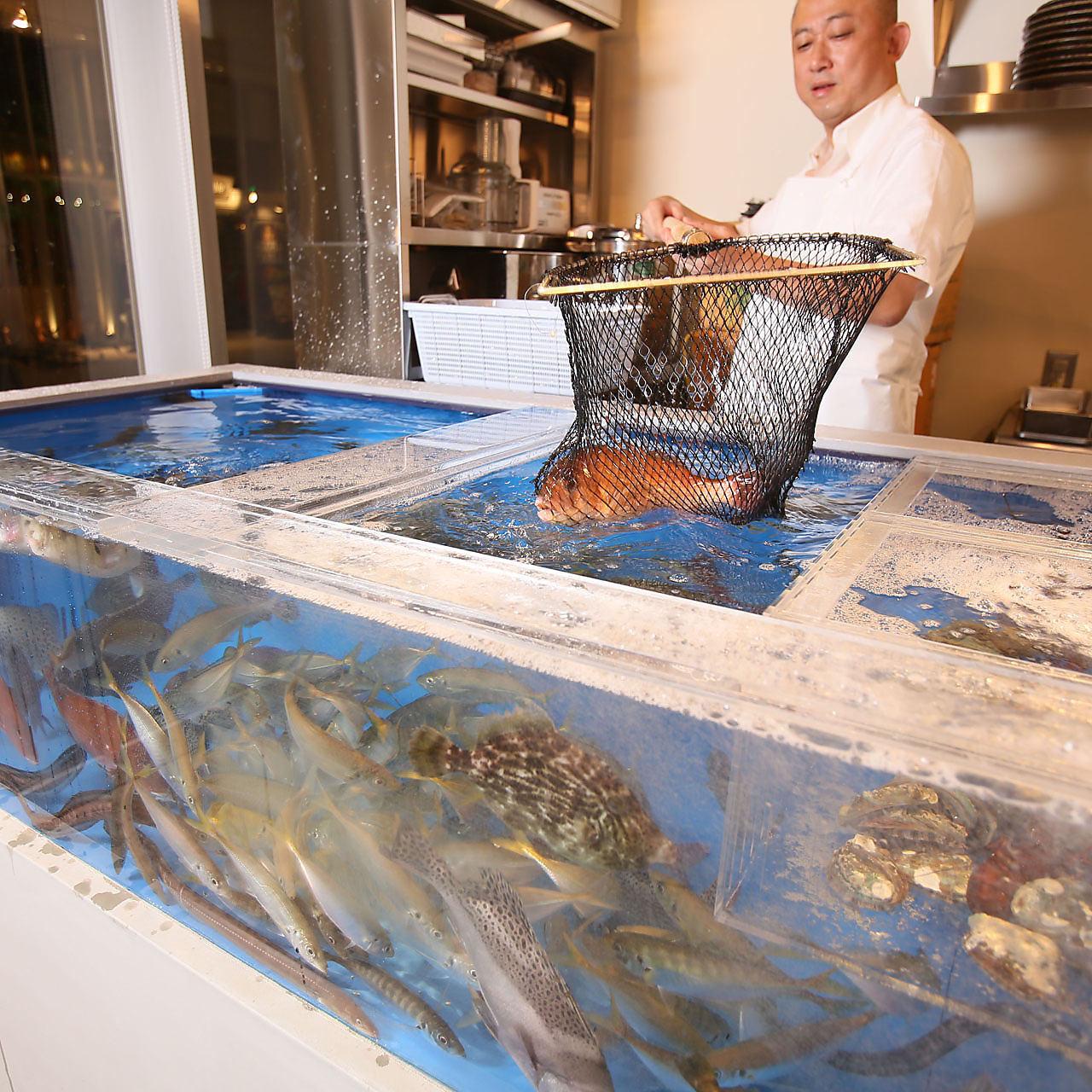 本日のいけす魚造り